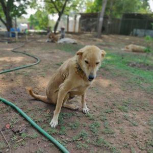 Taimur-Dogs of VOSD Sanctuary