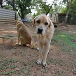 Katu VOSD Sanctuary Dog